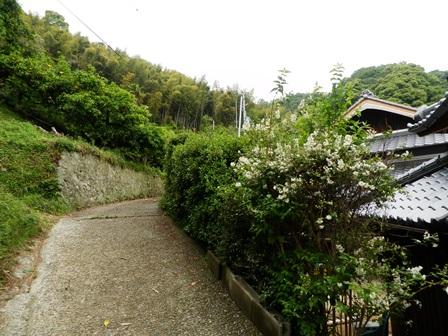 御井の清水8.jpg